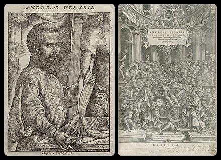 Vesalius Andreas-horz